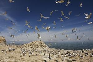 青海湖景区-鸟岛(不开放)