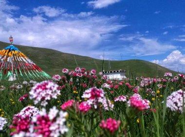 西宁热门旅游景点 青海湖旅游攻略