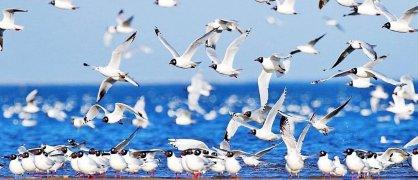 青海湖鸟岛包车大环湖全景一日游